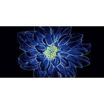 FLUORESCENT FLOWER BLUE  INSERTO POŁYSK 29,7X60 Gat 1