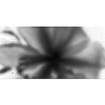 Black Orchid A Inserto Dgl-172a dekor 30x60 Gat 1