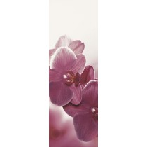 Abrila Inserto Kwiat B dekor  20x60 Gat 1